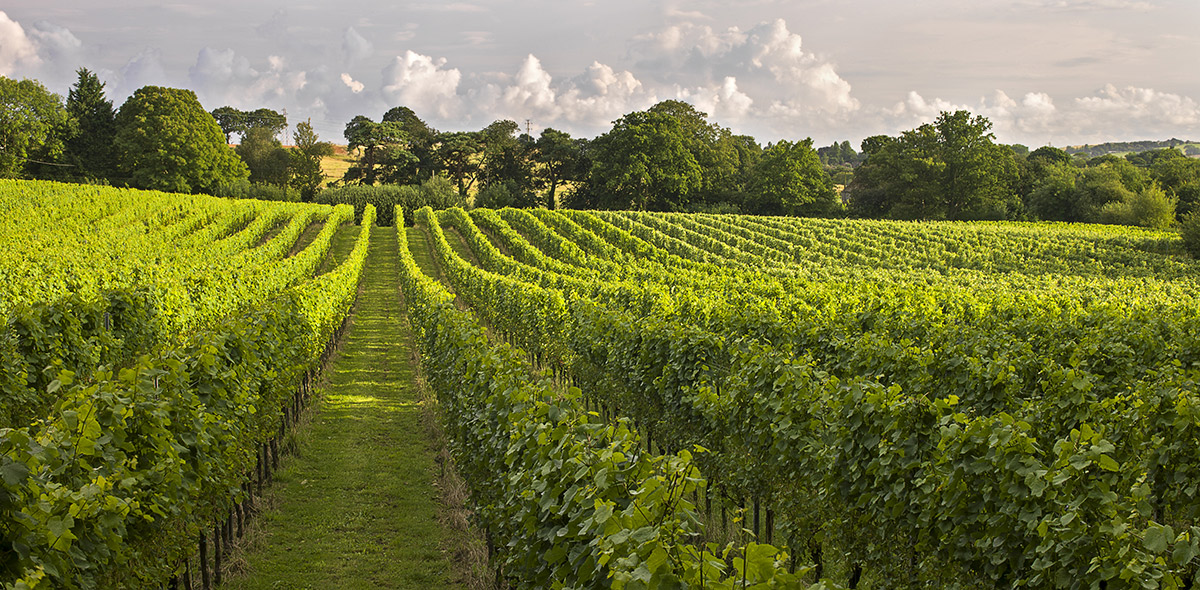 Square Mile Salute English Sparkling Wine partner, Gusbourne Estate win two IWSC Gold Awards!
