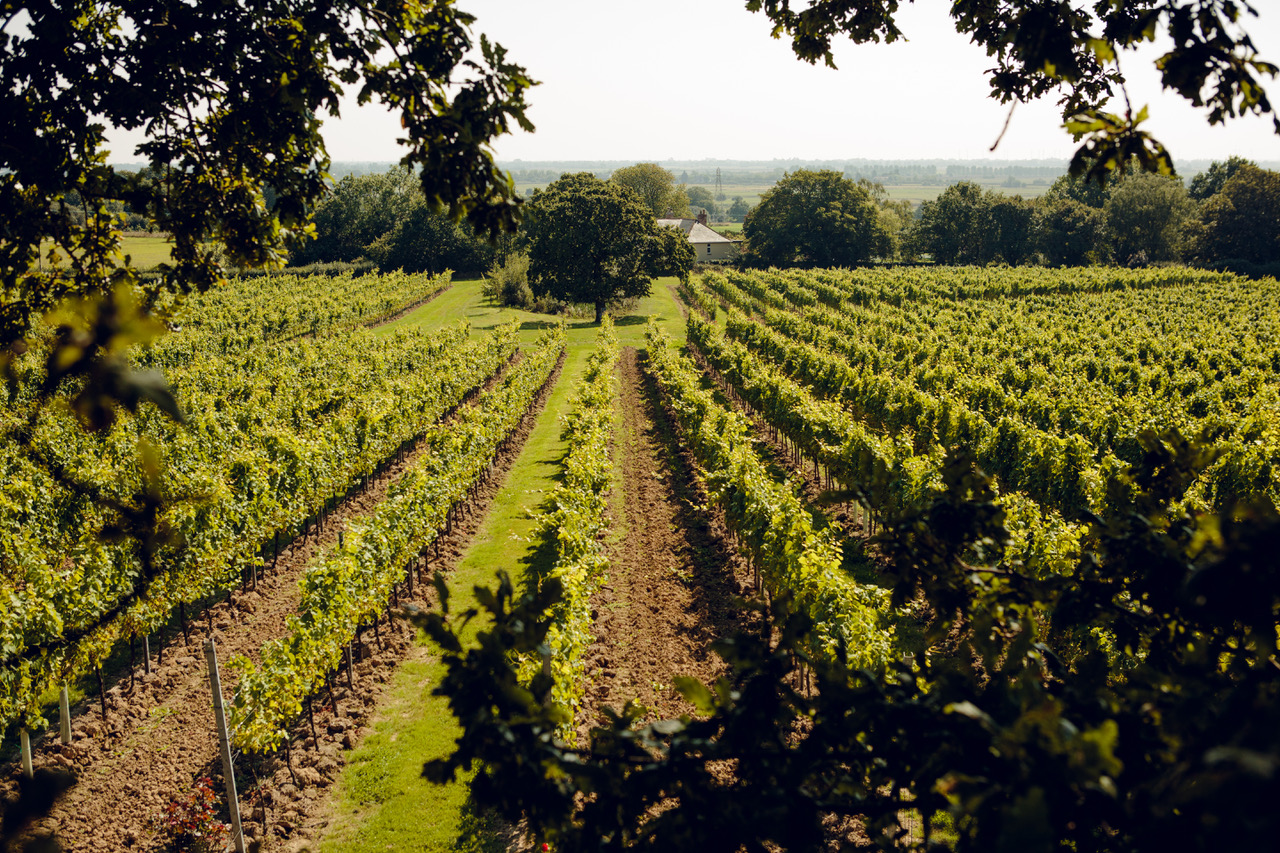 Gusbourne Vineyard Tour and Tasting for 4-6 people