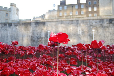 Original Poppy from Tower of London installation